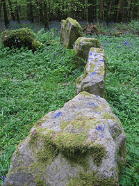 Court Tomb with Bluebells